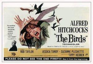 13081935_re-vision-gli-uccelli-di-hitchcock-1